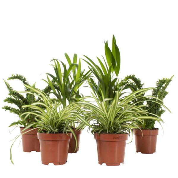 Air so pure plants