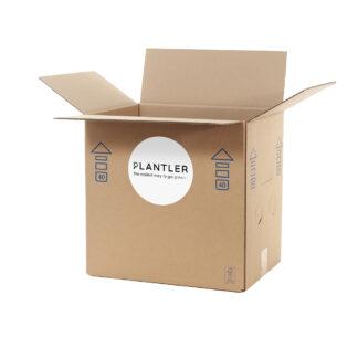 discount box plants