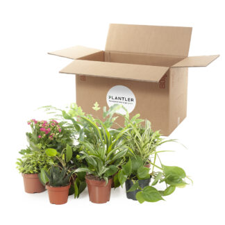 green misfits box