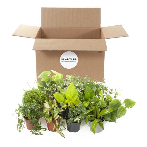 green miracle box