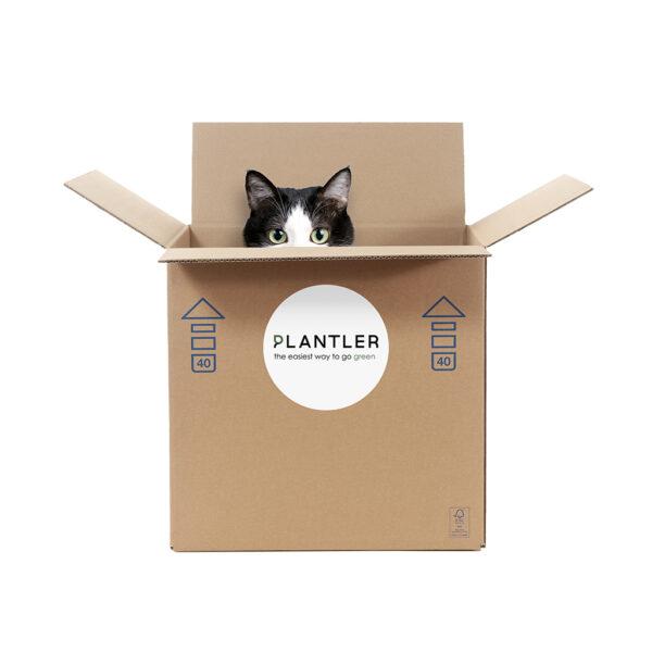 cat friendly plant